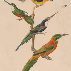 The W. Graham Arader III Collection comprises 15,000 pieces of natural history watercolors, woodcuts, engravings lithographs and maps.