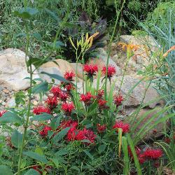 Bee balm and daylilies are among the many colorful perennials that dot the quarter-acre Nature Classroom located behind the USC Children's Center.