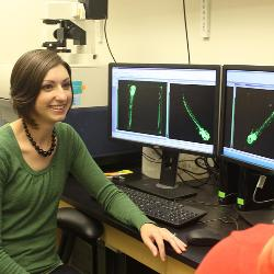 Jessica Leet is using genetically modified zebrafish to do human toxicology research in the Arnold School of Public Health. The modified zebrafish's vasculature fluoresces when illuminated by certain wavelengths of light.