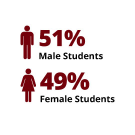 Infographic: 51% Male Students, 49% Female Students