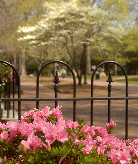 USC's Historic Horseshoe in Spring