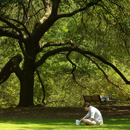 student sitting on green lawn near oak tree