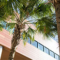 palm trees in front of darla moore school of business
