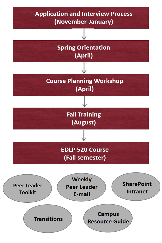 A graphic of the peer leader development model.