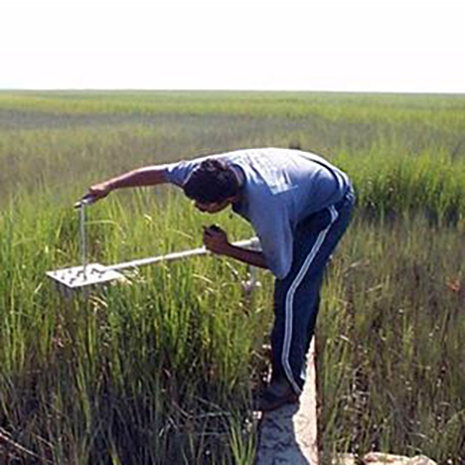 researcher collecting data in the marsh