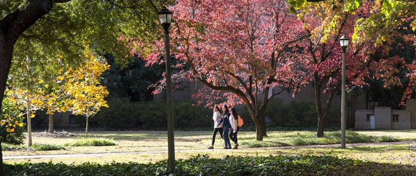 Three female students walking through the Horseshoe, framed by trees