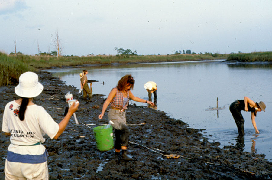 Students work in the tidal marsh to carry bucket after bucket of mud off of the wrecksite. (SCIAA photo)