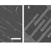 Left: CdS nanowires; Right: CdS nanowire field effect transistor