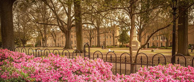Historic campus buildings as seen across the historic Horseshoe area of campus with bright pink flowers in the foreground and a view of the Maxcy monument and students lounging in the middle of the green space.