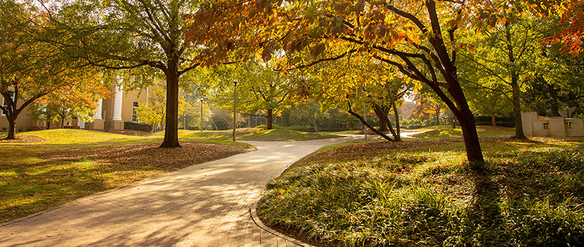 A shady tree-lined path on campus in the late afternoon sun leading to multiple historical university buildings.