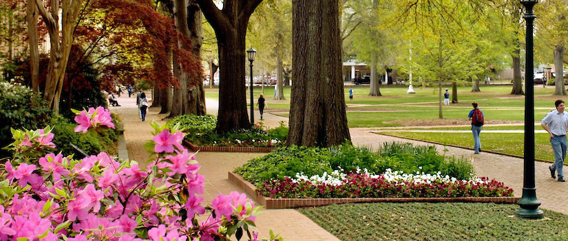 Students walking on campus paths surrounded by trees, flowers and greenery with pink flowers in the left foreground.