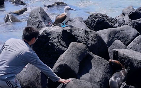 Galapgos student gets a closer look at a blue-footed Boobie and seal while studying on the Galapgos Islands