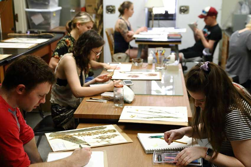 While professor Schneckloth was in Norway for the seed vault exhibition, she arranged for her drawing class to visit the A.C. Moore Herbarium to explore connections between science and art.