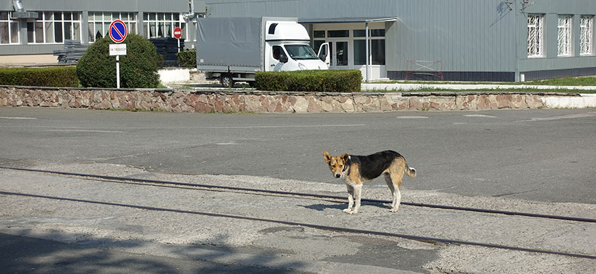 A dog near Chernobyl in Ukraine