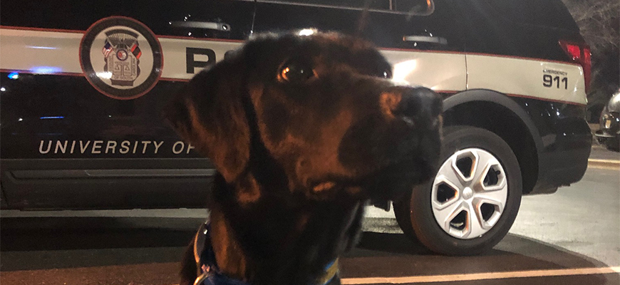 One of the two new K9 officers at UofSC in front of a police vehicle at night