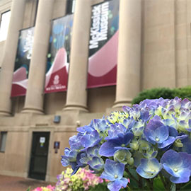 Hydrangeas outside of Mckissick Museum