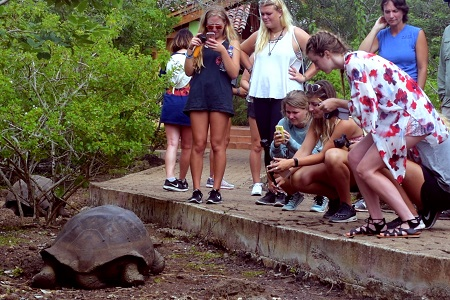 Students and tortoises