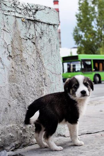 Stray puppy near Chernobyl