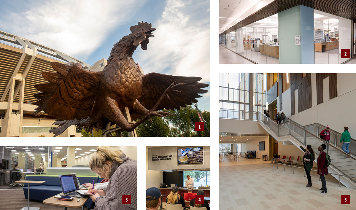 numerous images showing the gamecock statue, the chemistry labs, the lobby of the science building, the culinary lab and the library study areas.